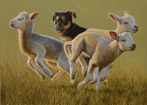 'A Time for Innocence' Kelpie Pup and Lambs