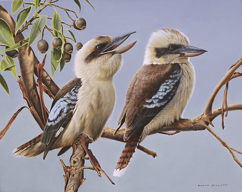 Laughing Kookaburras Card
