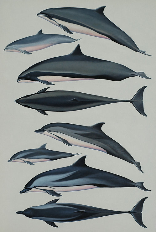 Fraser's and Striped Dolphins