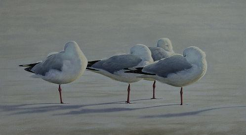 'Winter Gulls' Silver Gulls