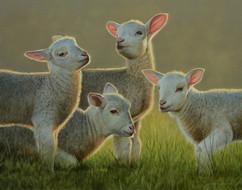 Lambs 2.JPG