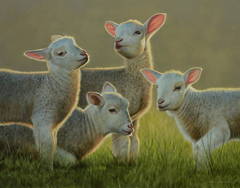 'Spring Lambs'