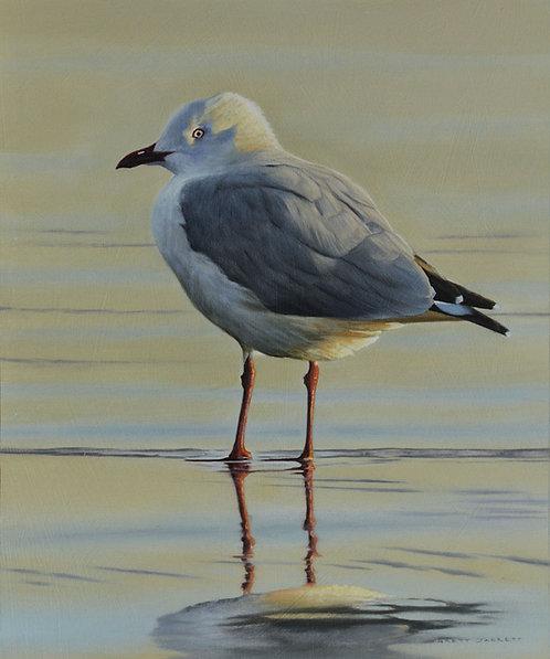 Silver Gull Card