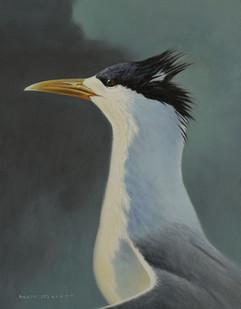Crested Tern II 22 x 29 cm birds.JPG