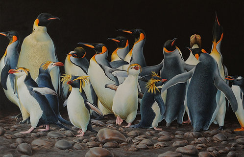 'Emperors, Royals, Kings and Queens' Penguins