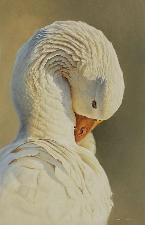 'Peaceful'Goose Portrait
