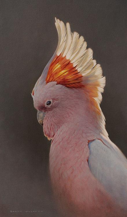 'Firecrest' Pink Cockatoo