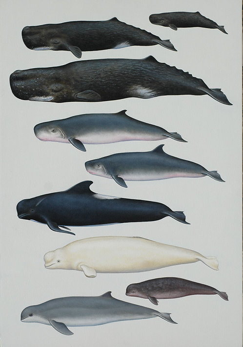 Sperm Whales and other species
