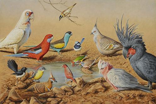 Various Bird Species Card