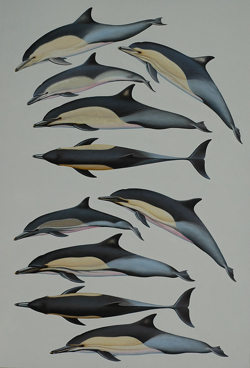 Short and Long-beaked Common Dolphins