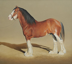 'Classic Lines' Clydesdale Stallion 91 x