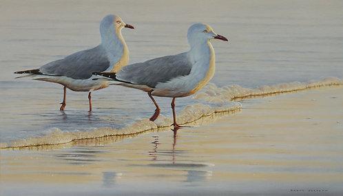 'Tide Line' Sliver Gulls