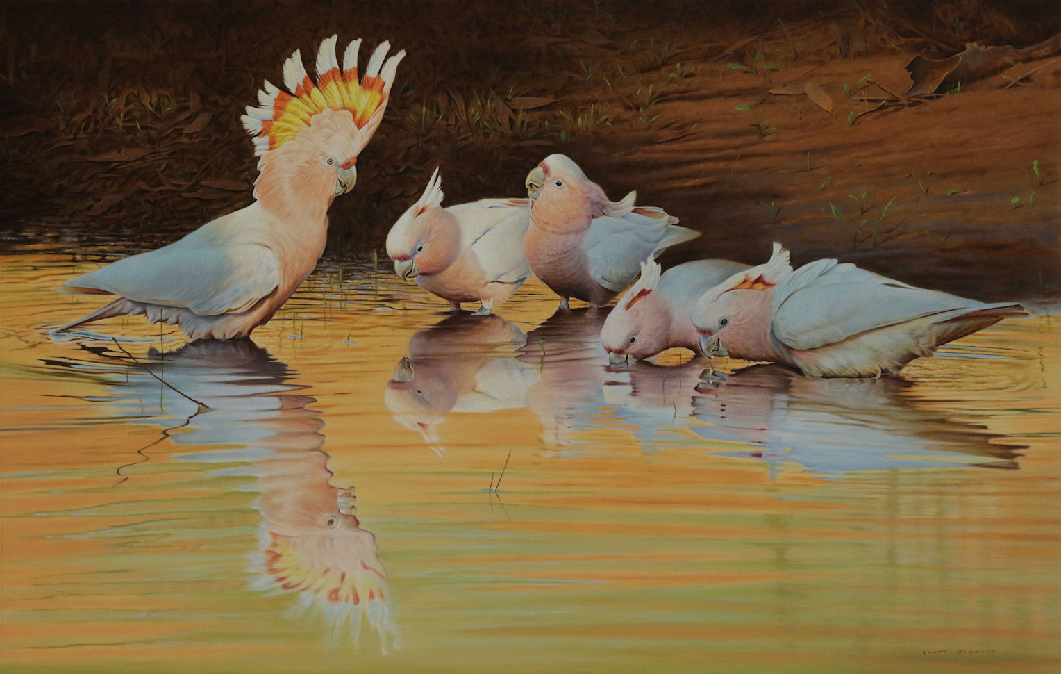 'Showboat' Pink Cockatoos - Copy