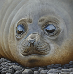 Elephant seal pup 90 x 90 cm oil