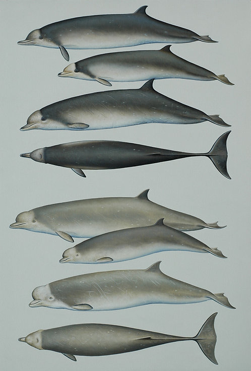 Southern and Tropical Bottlenose Whales