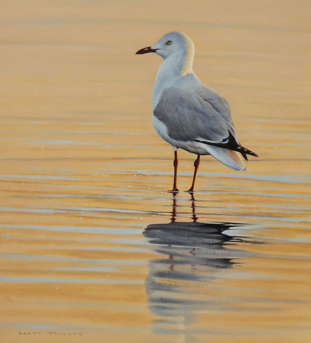 'Tranquility' Silver Gull
