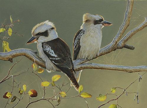 'Golden Hour' Kookaburras Card