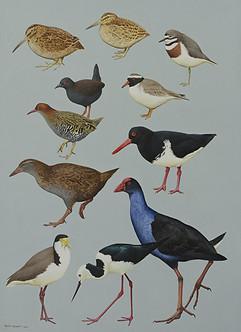 Complete Guide to Antarctic Wildlife NZ
