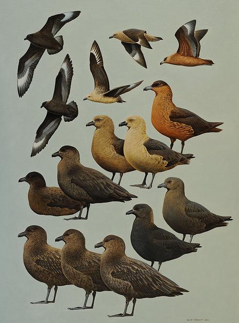 A Complete Guide to Antarctic Wildlife: Skuas