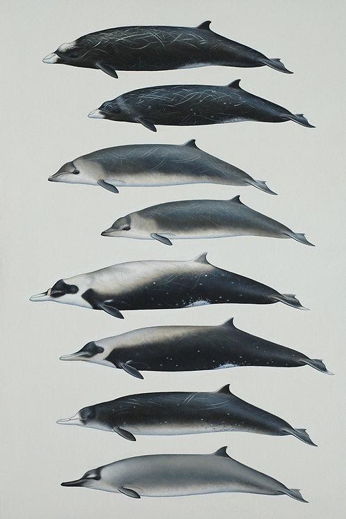 Beaked Whales