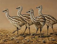 Emu Chicks 55 x 43 cm birds.JPG