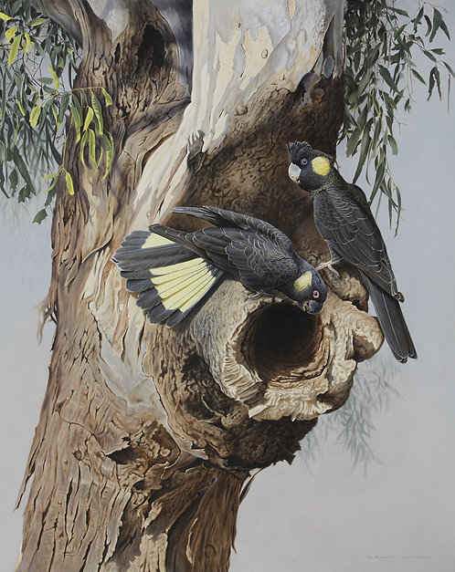 Holmes Art Prize Winner 'The Prospectors' Yellow-tailed Black Cockatoos