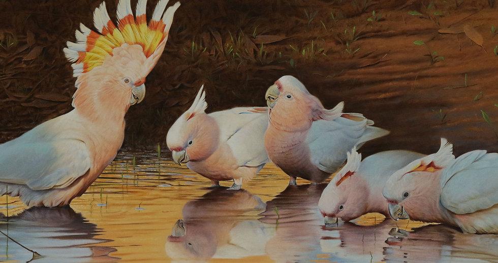 Brett Jarrett Wildlife Artist Narrawong Victora Austraia Animal Art.JPG