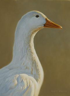 White Duck portrait 26 x 35 cm birds.JPG