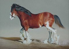 'Power and Grace' Clydesdale 101 x 76 cm