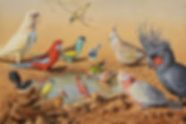 'Australian Colours' Bird Species.JPG