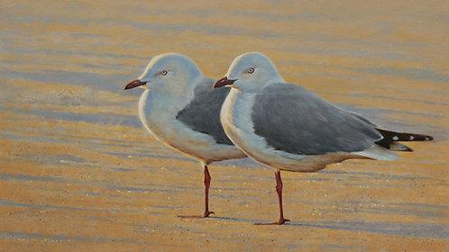 'Approaching Dusk' Silver Gulls