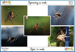 Spinning a web.jpg