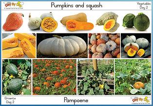 Pumpkins and squash.jpg