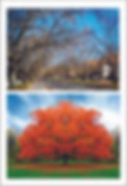 winter and autumn.jpg