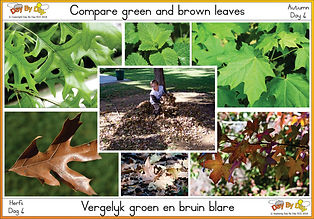 Compare green and brown leaves.jpg