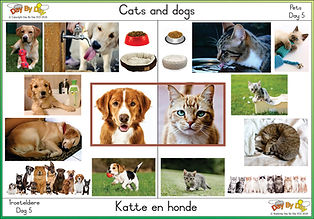 pets day 5.jpg