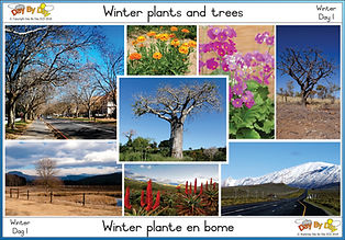 Winter plants and trees.jpg