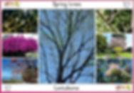 Spring trees.jpg