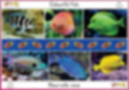 Colourful fish.jpg