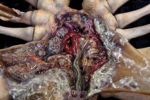 Alien Facehugger Autopsy Wall Hanger Life-Size