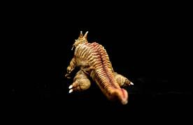 虹の卵パゴス地底怪獣