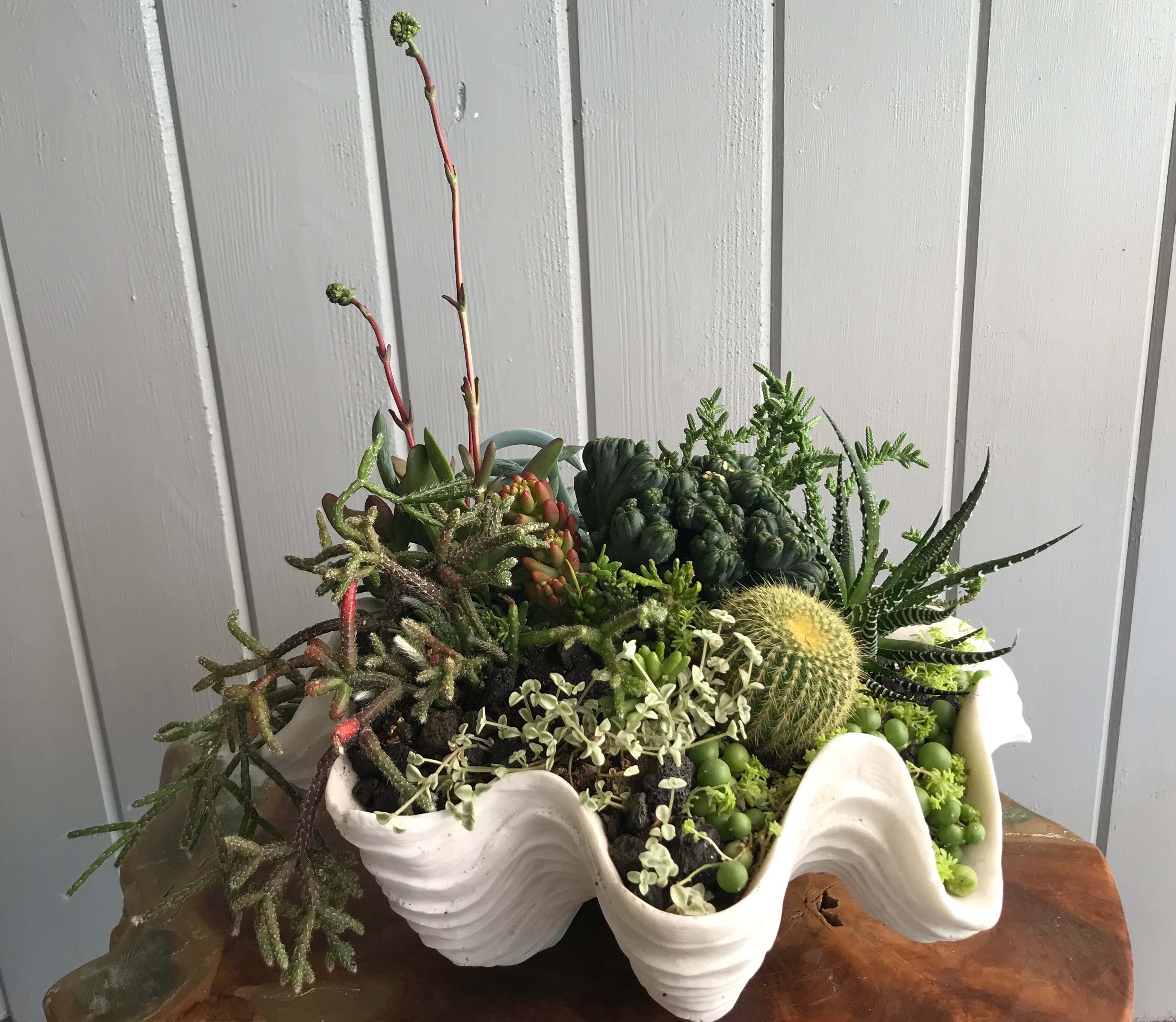 Giant Clam Shell Container Garden