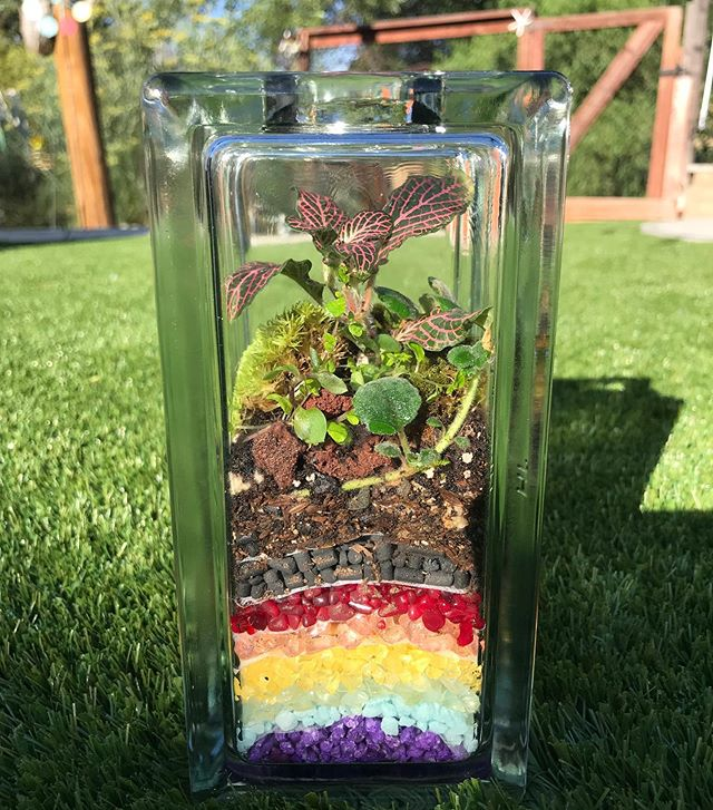 Watch love grow Rainbow Container Garden ❤️🧡💛🌱💚💙💜