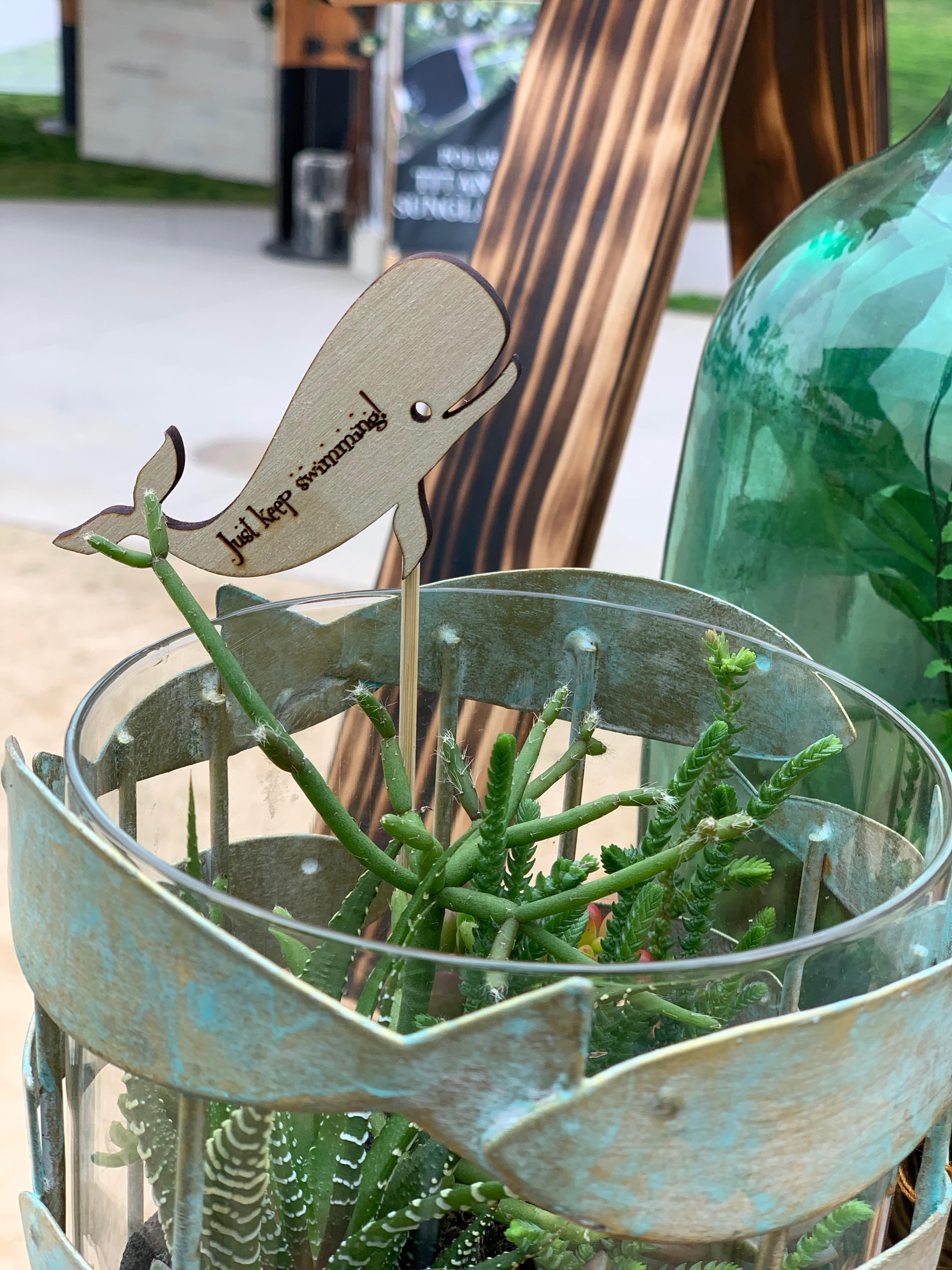 Fish Succulent Container Garden