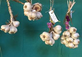 Willow Garlic Growers