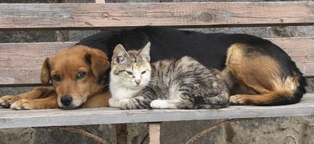 7 maneiras de ajudar um animal de rua