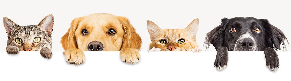 Dog-_-Cat-Banner-Image.jpg