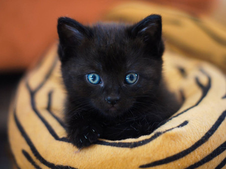 Um gato preto é apenas um gato