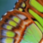 domain-7.jpg