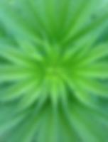 IMG_6874.webp